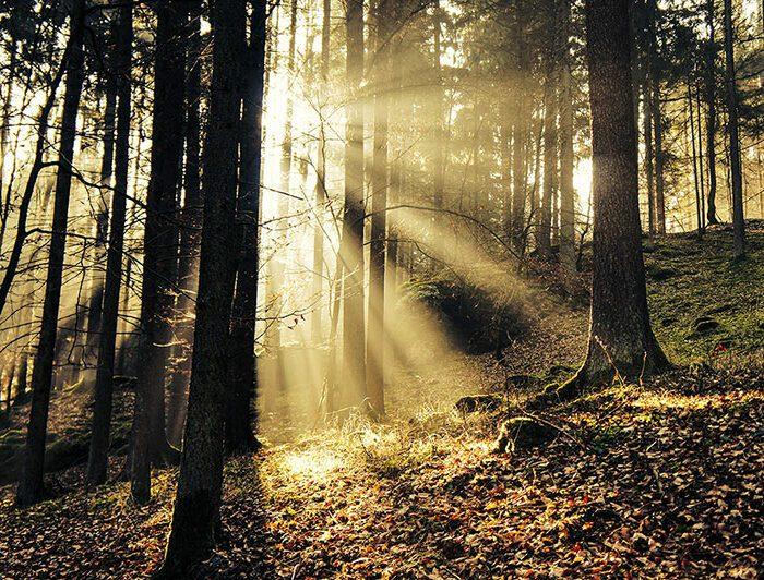 Wald Woerth